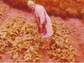 Emma Spurrell tending her cabbage garden in Butter Cove