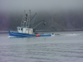 Fabian J heading Gooseberry Cove with a successful days caplin catch