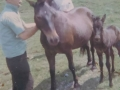 Queen and foal owned by Harrison Spurrell with Ben Spurrell