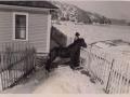 Horse Harry-Az's Horse-Baxter's House background