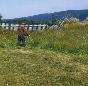 Cousin Wilson Vey cutting hay, 1965