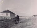 Horse Harry-Baxter's House