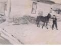 Horse Jen-William King-Boy Cater King