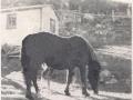 Horse-Lane 62